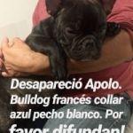 Desapareció APOLO