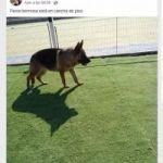 Desaparecio perra policia cachorra