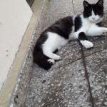 Gato blanco y negro perdido