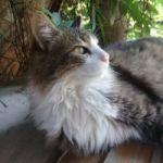 Gato extraviado