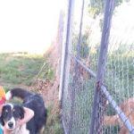 Se busca perra  perdida
