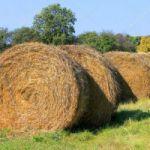 Vendo rollos de alfalfa zona Metileo