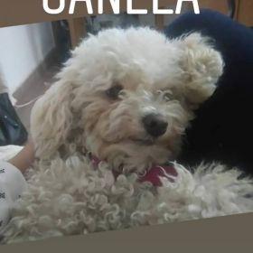 Se perdió Canela
