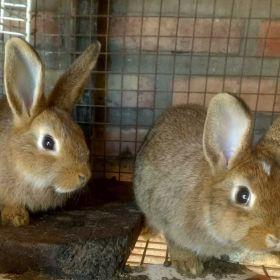 Vendo conejitos
