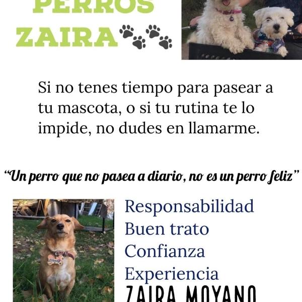 Paseo de perros individual