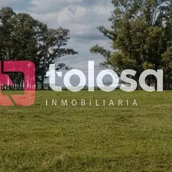En Venta, campo ubicado a 5 km de ruta 7, zona Colonia La Carlota, a 90 km de General Pico, L.P.