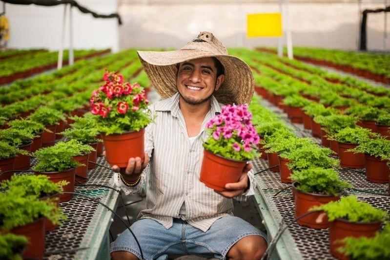 Realizar n una jornada de producci n de plantas for Produccion de plantas ornamentales