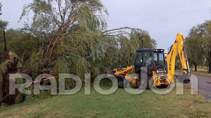 Personal municipal retirando los árboles caídos (Foto: RadioDon).