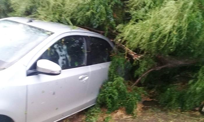 Un árbol cayó sobre un automóvil (Foto: RadioDon)
