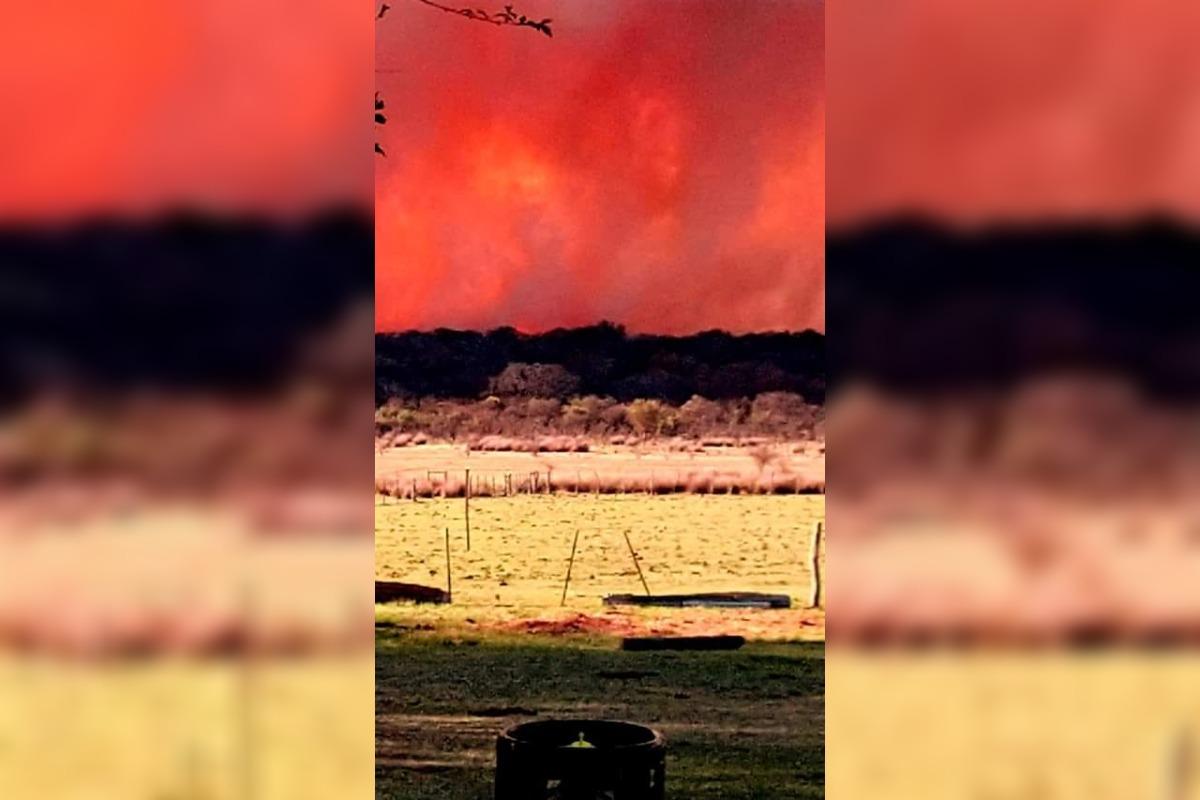 Incendio forestal en la zona de Quehué ha dejado una gran cantidad de animales muertos
