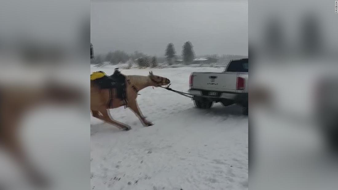 Maltrato animal: arrastraron cruelmente a su caballo con la camioneta