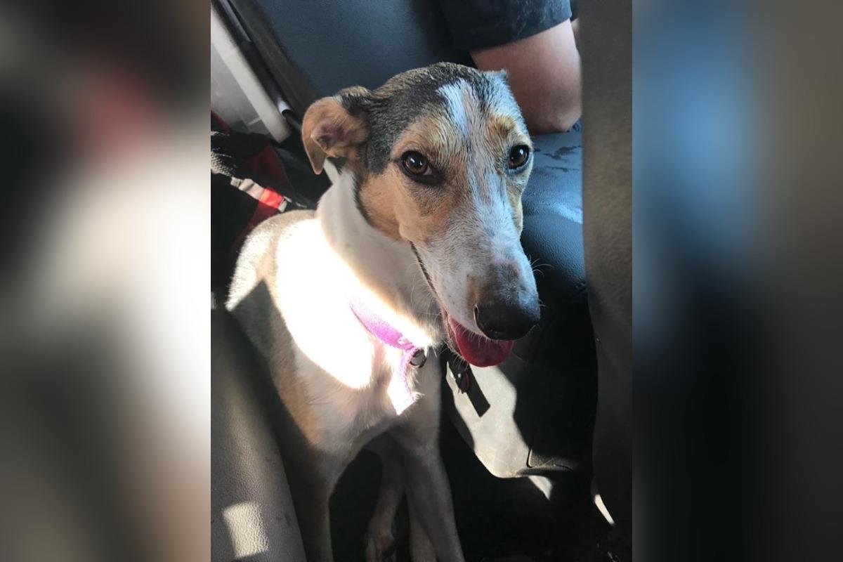 Hallaron a Yerba, la perra que era trasladada en un camión que robaron en el tramo Trenque Lauquen-Santa Rosa y que era intensamente buscada por su dueña