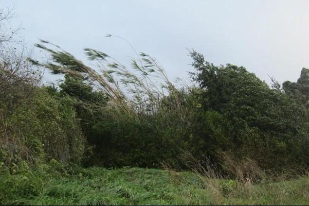 Emiten un alerta por «vientos fuertes con ráfagas de hasta 80km/h» para el Sur de La Pampa
