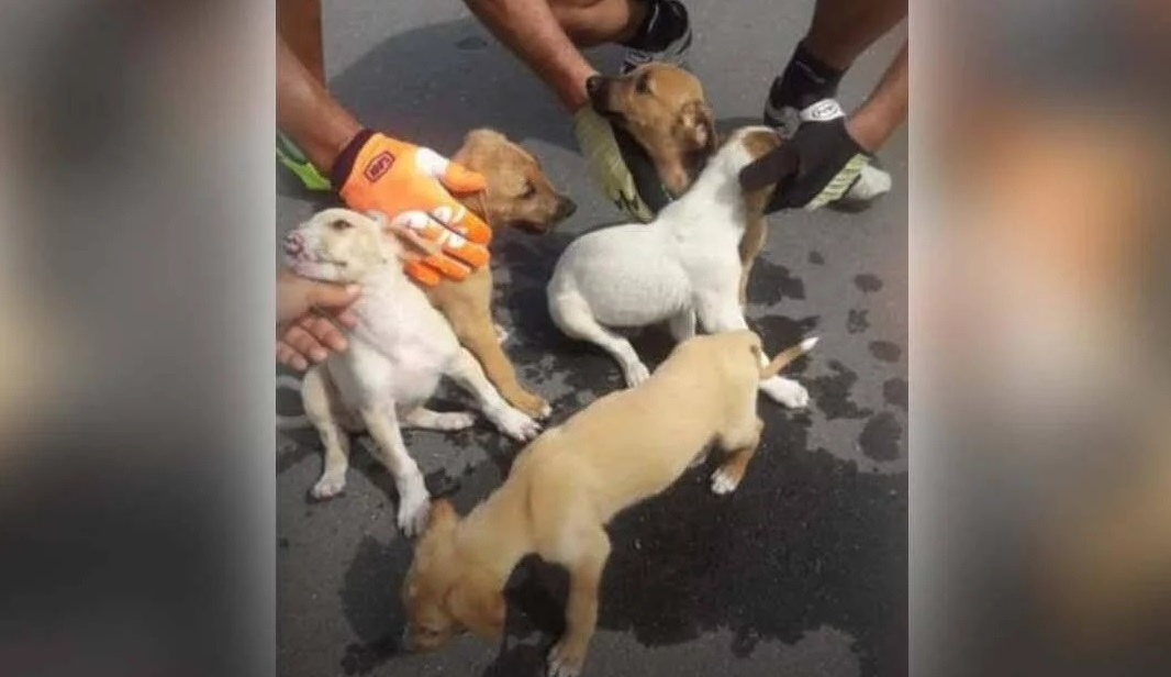 San Luis: Ciclistas le salvaron la vida a seis cachorros abandonados que iban a morir de sed