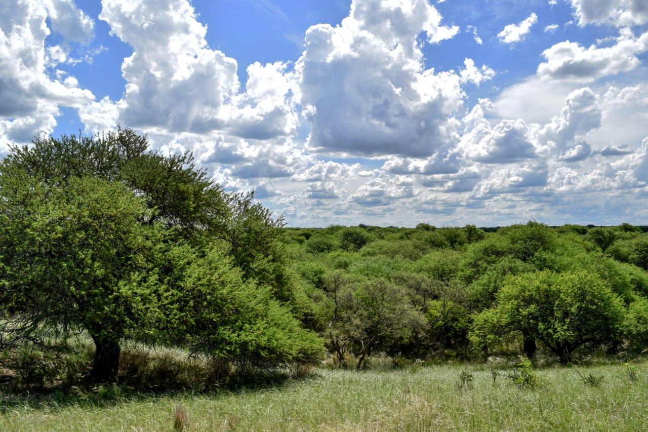 Se dan los primeros pasos hacia la creación de un nuevo Parque Nacional en La Pampa