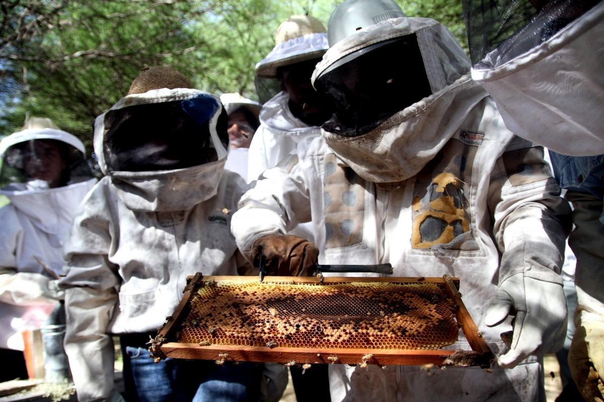 Un empresario europeo recorrió apiarios pampeanos y destacó la gran calidad de sus mieles