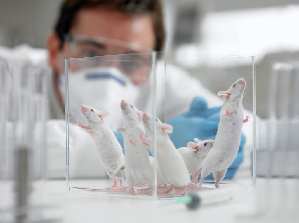 Dictarán un Curso de Posgrado sobre Uso y manejo de animales de experimentación en Veterinarias