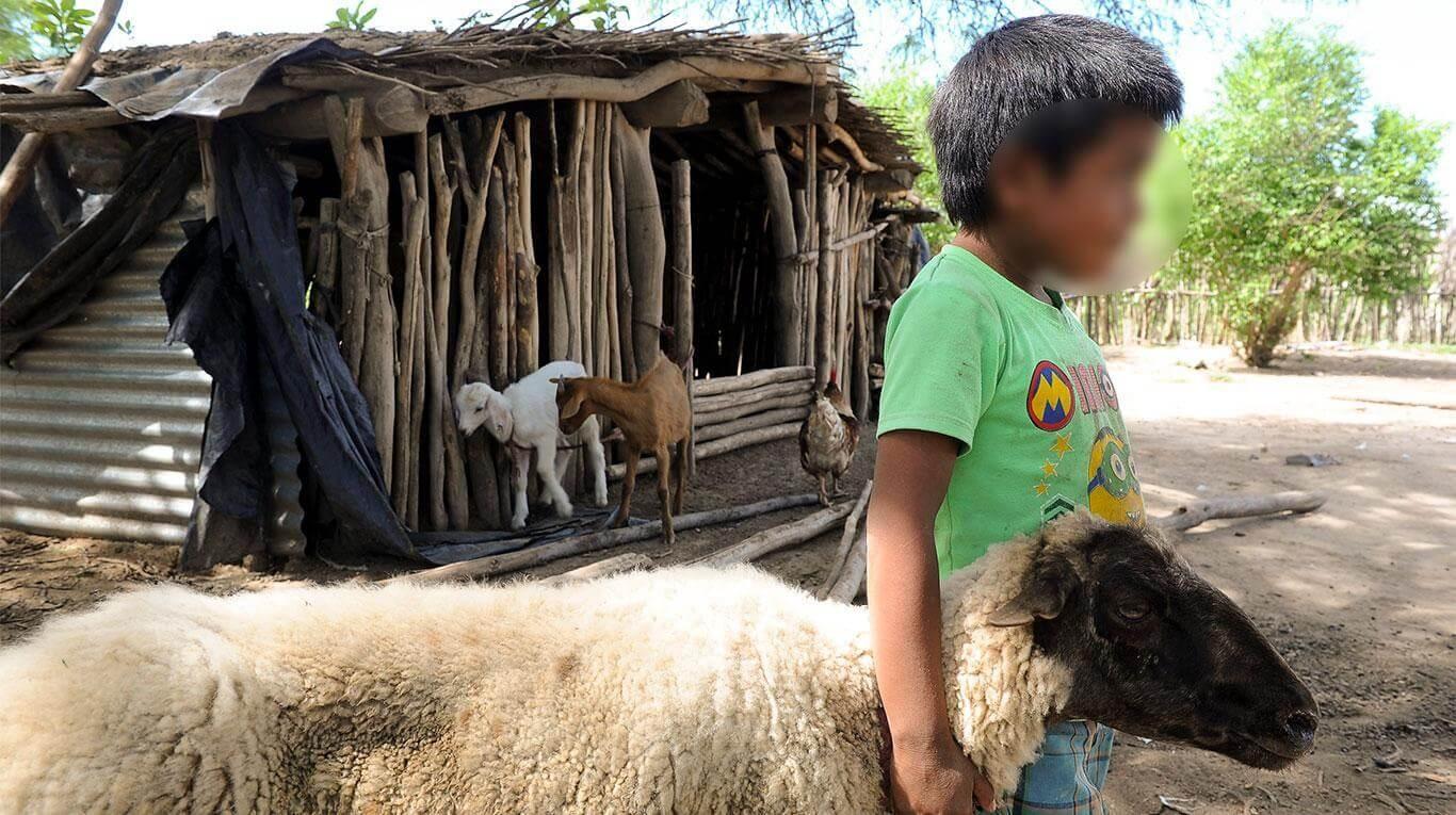Al menos 32 niños wichí están internados en Salta por desnutrición
