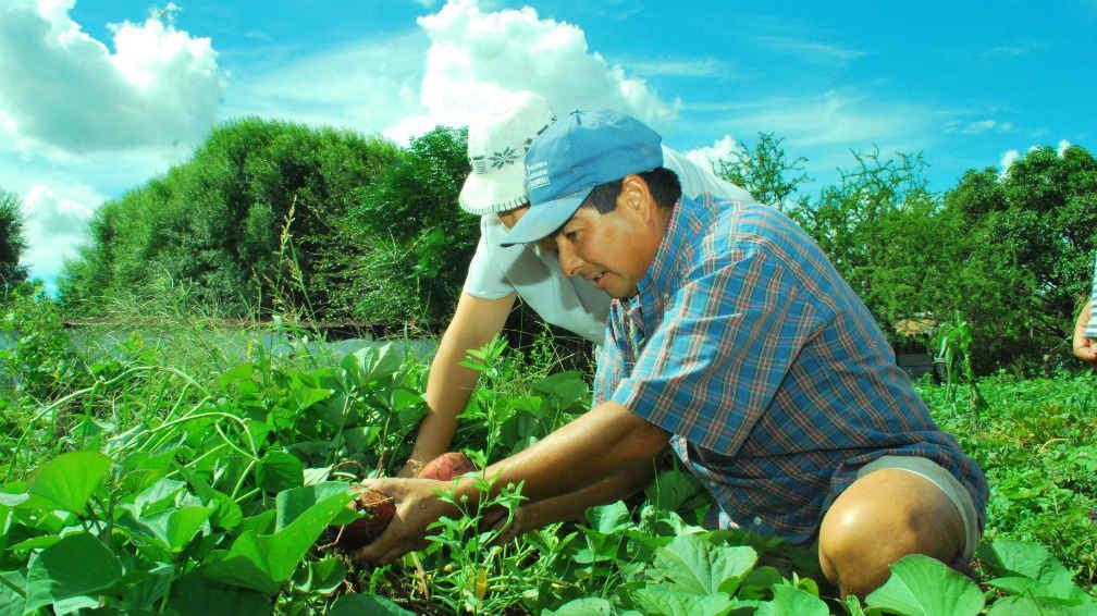 Productores agropecuarios deberán certificar, en el Comando Radioeléctrico, las autorizaciones para libre circulación