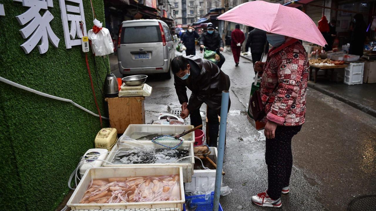 Aseguran que en China siguen vendiendo murciélagos y animales domésticos