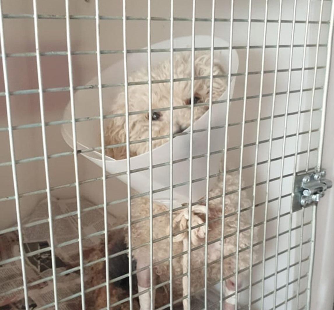 """Vecina de General Pico agradeció a las personas que la ayudaron a salvar una perrita que fue brutalmente atacada por un Pitbull: """"Sin su ayuda, Fermina no estaría viva"""""""