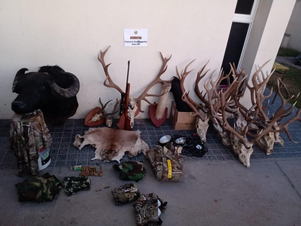 Telén: Secuestran en un campo una importante cantidad de cabezas de ciervos, animales embalsamados, cueros, armas y elementos de cacería