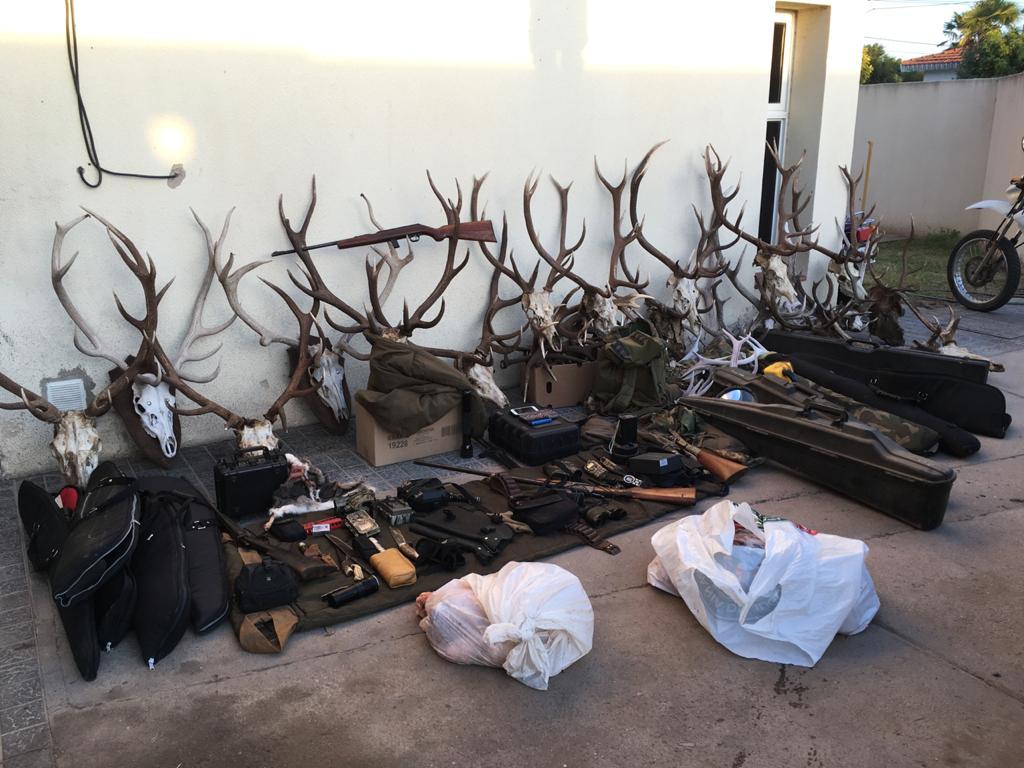 La policía secuestró 19 cabezas de ciervo colorado, 13 armas de fuego y diversos elementos utilizados para la caza ilegal en cercanías de Telén