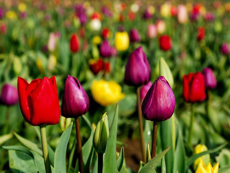 Atención amantes del Jardín: Estas son las tareas de abril