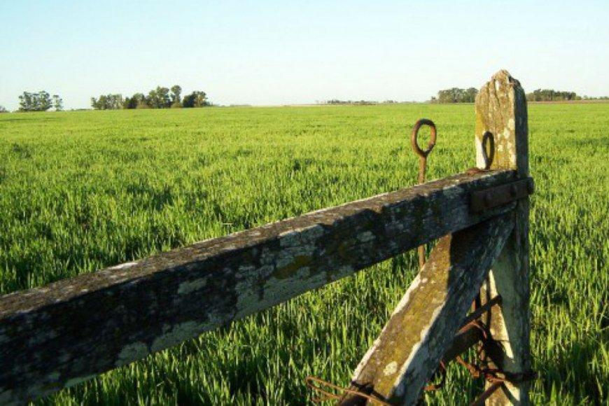 Impuesto Inmobiliario Rural: el gobierno extendió el pago hasta el 30 de abril