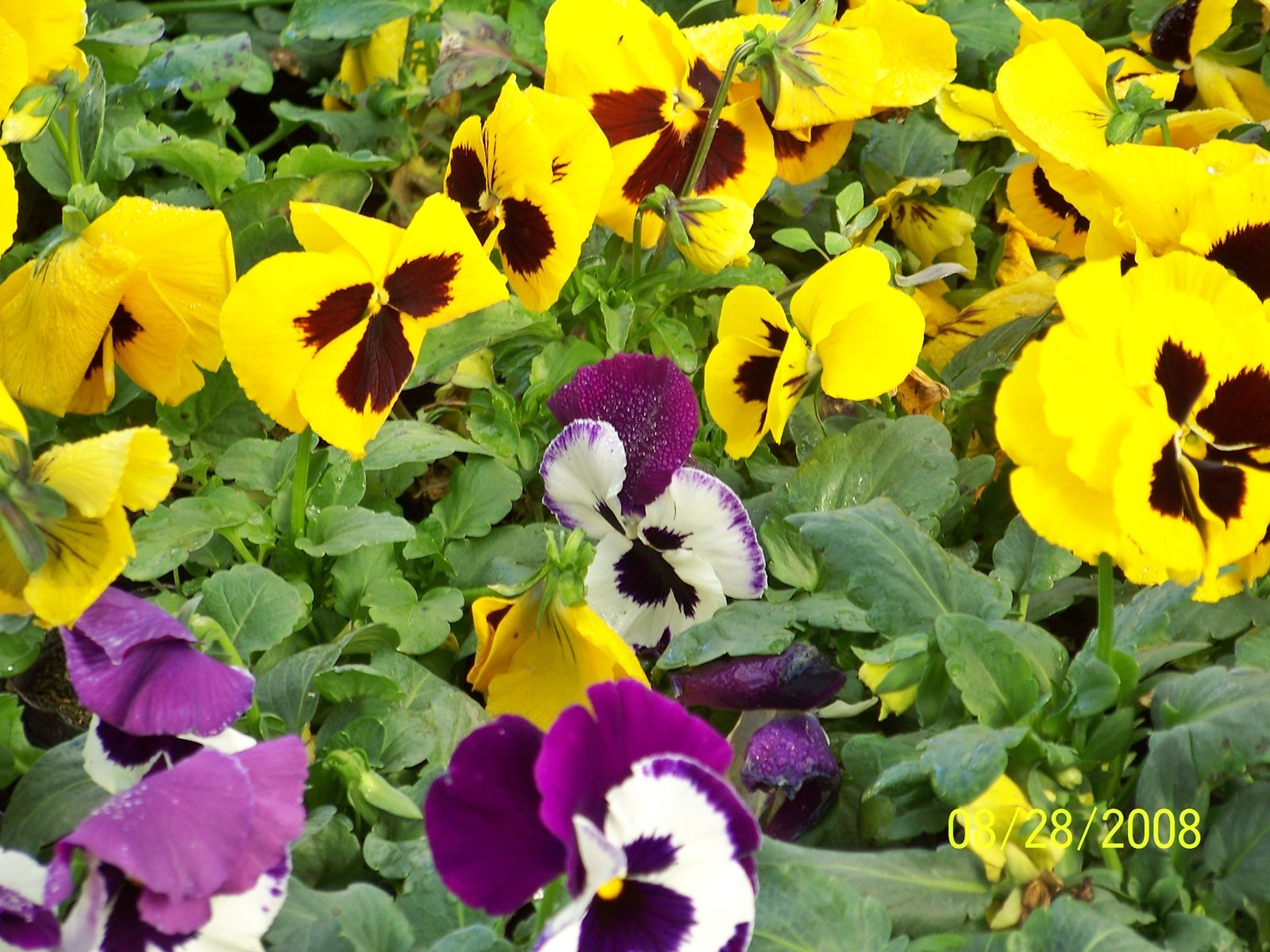 Para los amantes del Jardín: Tareas del mes de mayo