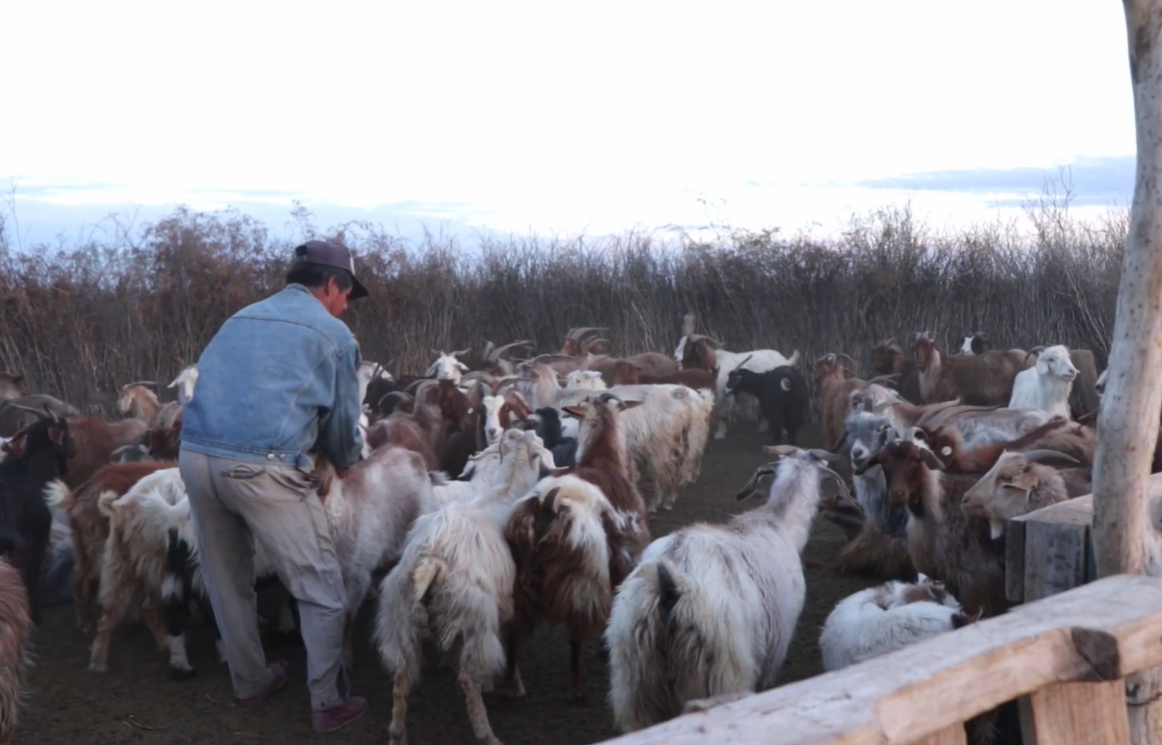Mirá el video que muestra el trabajo de más de 100 familias rurales del oeste pampeano agrupados en el MTE Rural