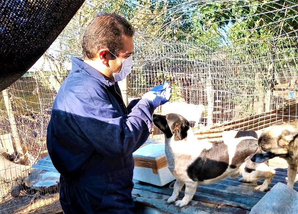 Vacunaron a mas de 250 animales alojados en el refugio canino