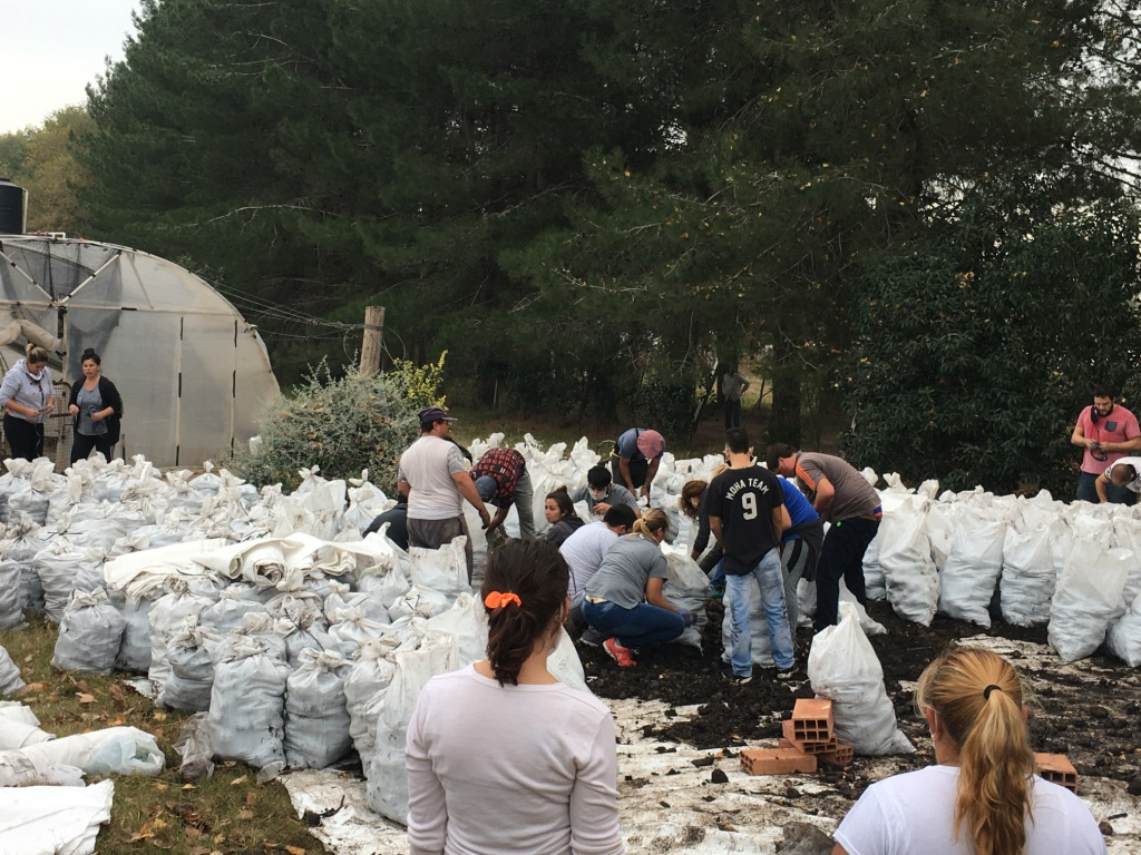 La fundación Cosecha Completa donó 15 toneladas de papas a granel para General Pico