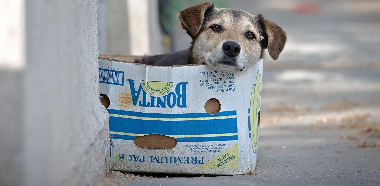 """Se celebra en todo el mundo el """"Día del perro sin raza"""" y difunden la campaña """"comprar menos y adoptar más"""""""