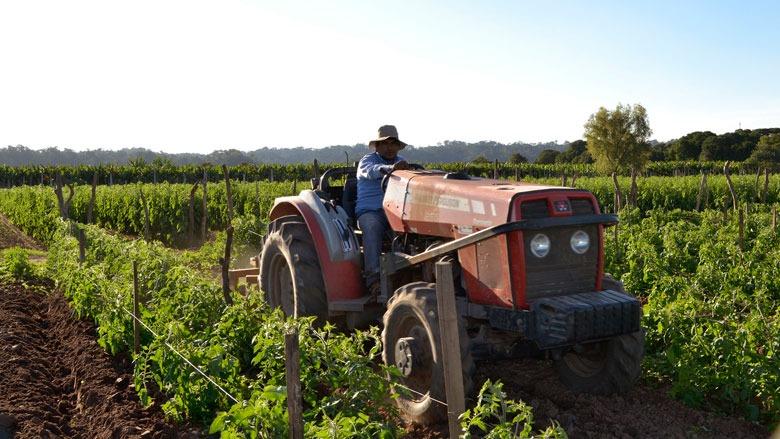Agrarios mostraron su preocupación por los altos valores que pagan los consumidores y lo poco que percibe el productor