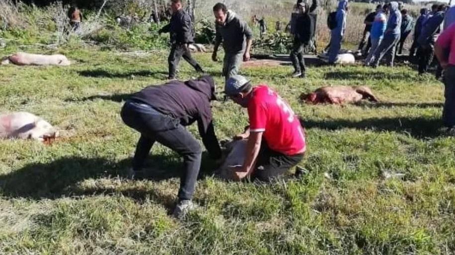 Coronel Vidal: Volcó un camión con cerdos y los vecinos de la zona los carnearon, la Policía detuvo a más de 20 personas