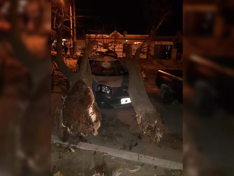 Santa Rosa: ráfagas de casi 70 km/h tiraron un viejo árbol que cayó sobre un vehículo