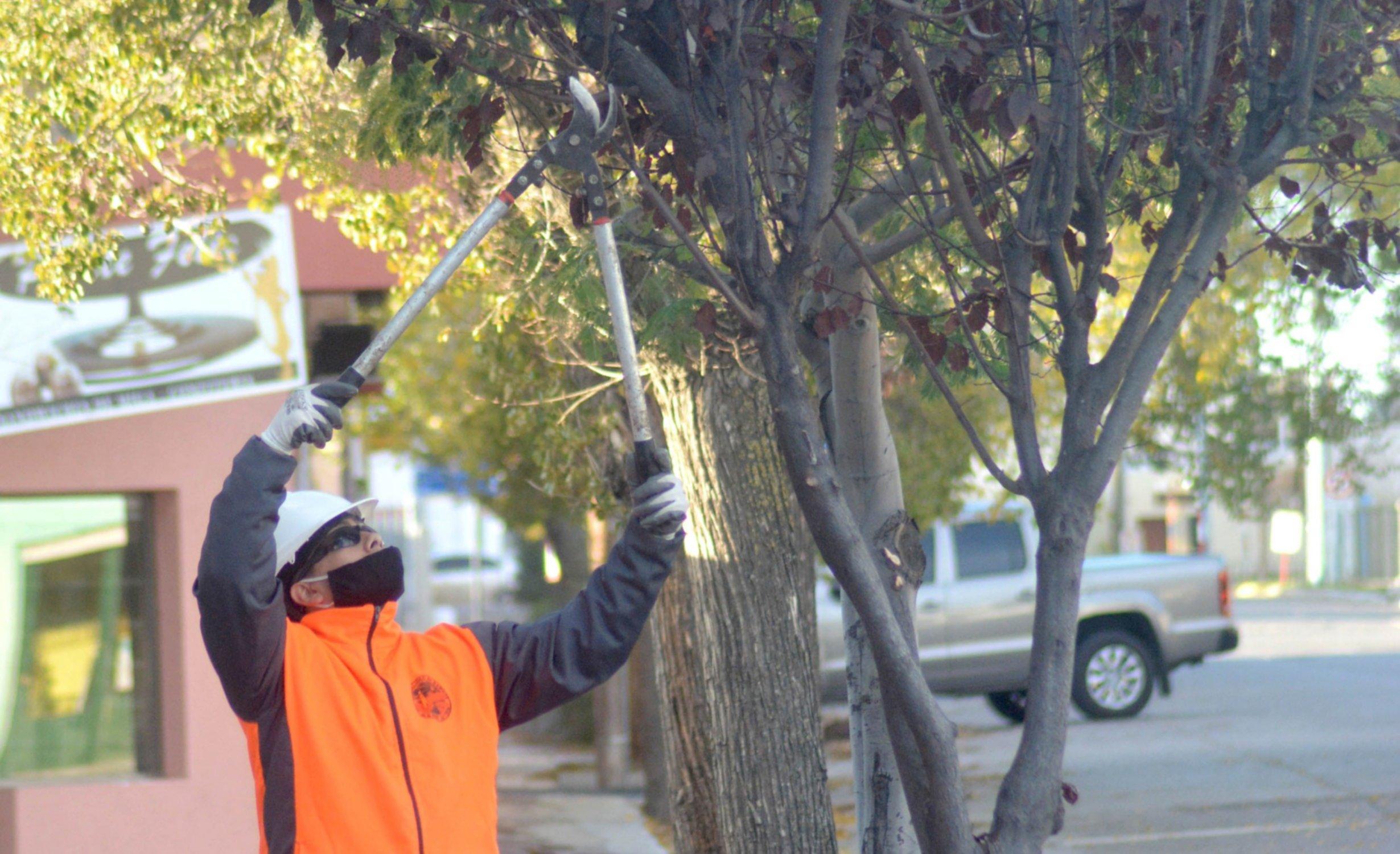 Atención vecinos: el municipio recuerda que no se puede podar o quitar árboles sin la autorización respectiva