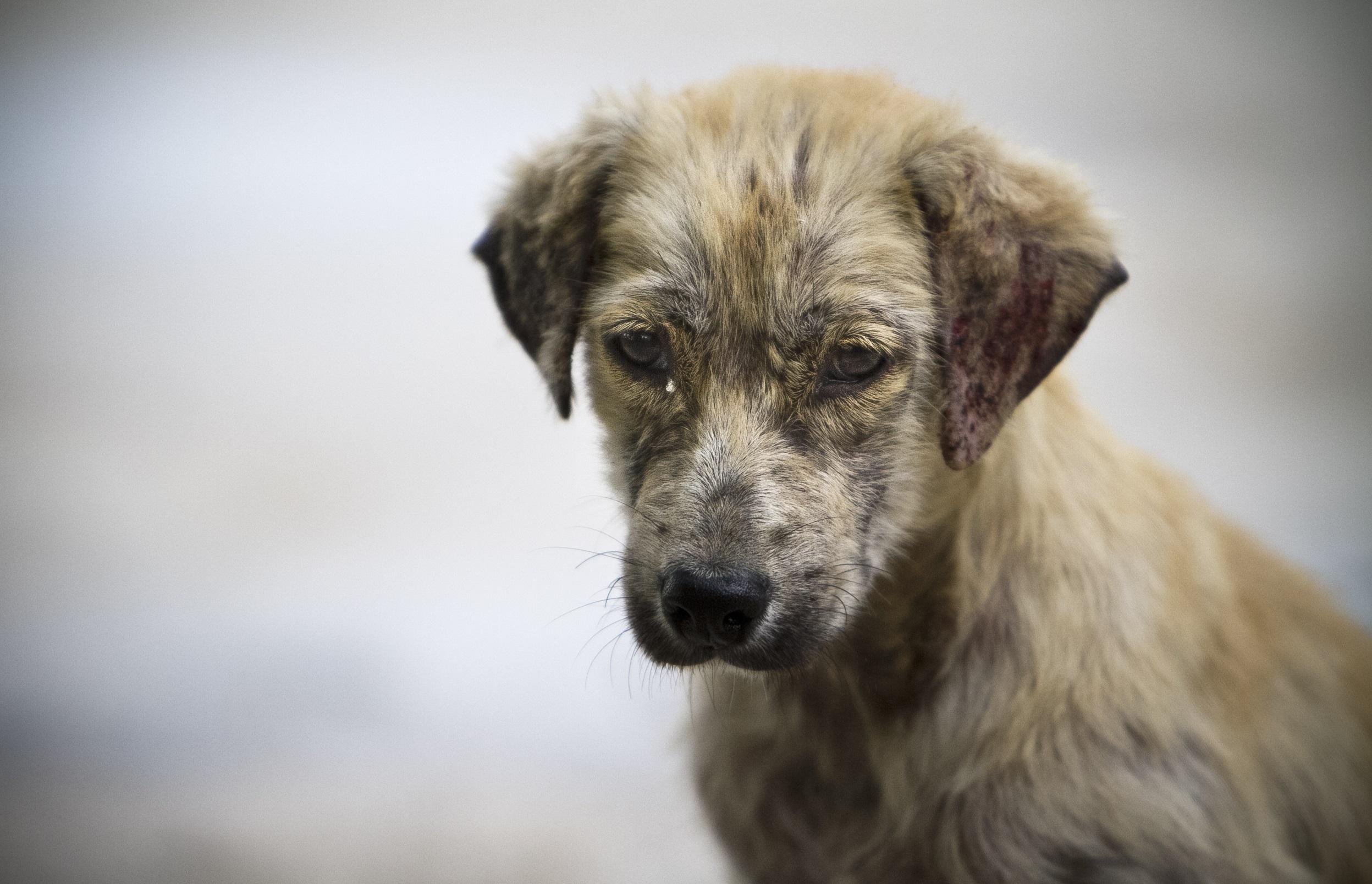 Durante la cuarentena se duplicaron los casos de perros abandonados en todo el país