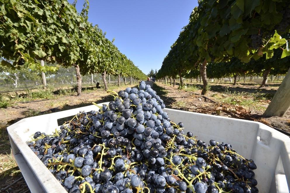 La Pampa se convierte en referente de la producción vitivinícola y ahora será parte de la Organización Mundial de Enoturismo