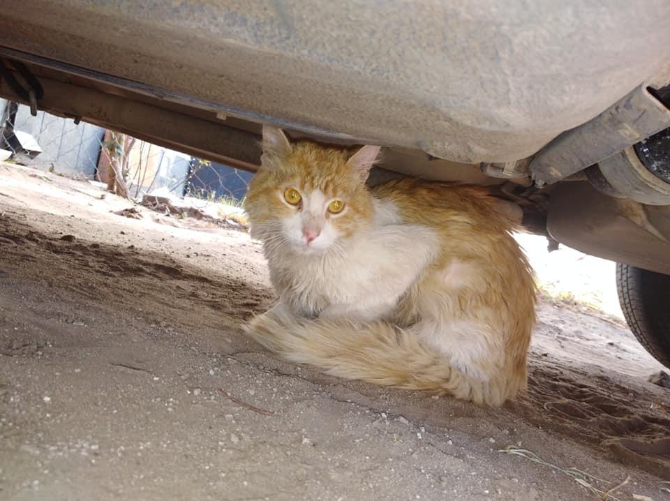 """Barrio Federal: Organizan una rifa para operar a """"Pepo"""", un hermoso gato que apareció con una fractura en su pata"""
