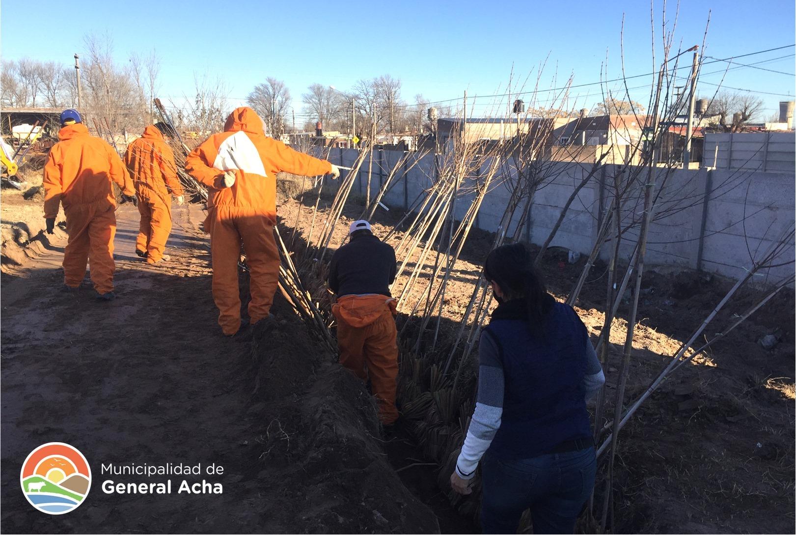 Empiezan a llegar los árboles para el Plan de Forestación en General Acha