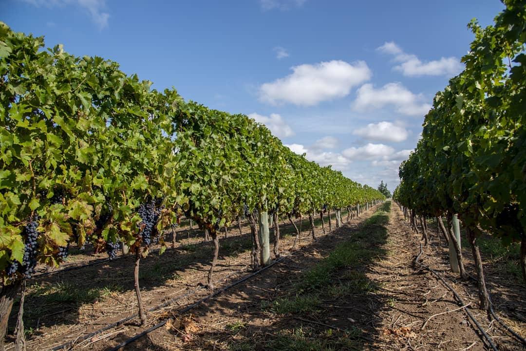 La Pampa potencia el Turismo del Vino para atraer a los turistas tras la pandemia