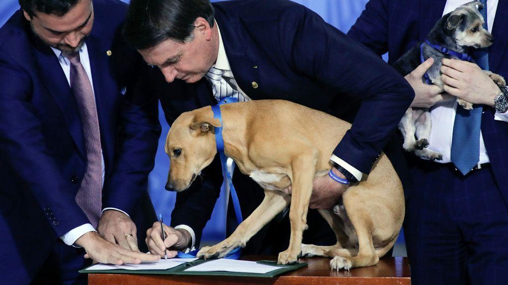 """Jair Bolsonaro promulgó una ley contra el maltrato animal e hizo """"firmar"""" a su perro"""
