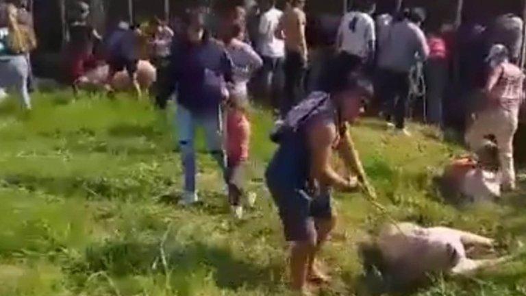 Pilar: volcó un camión con cerdos y vecinos los carnearon en la calle y se los llevaron