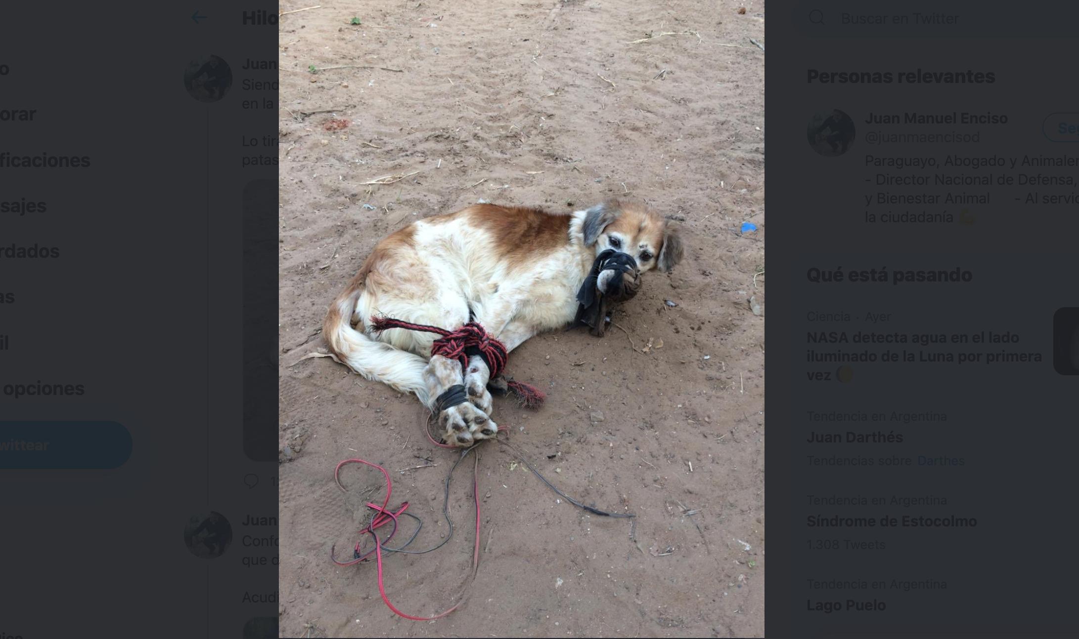 Indignación en Paraguay: encontraron a un perro maniatado y amordazado con cables y sogas en un baldío