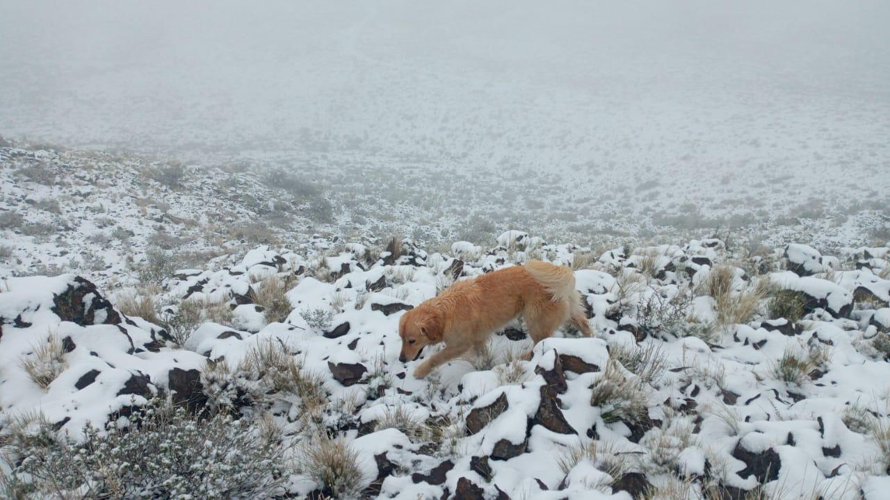 La Humada: Más postales de la histórica nevada en pleno octubre