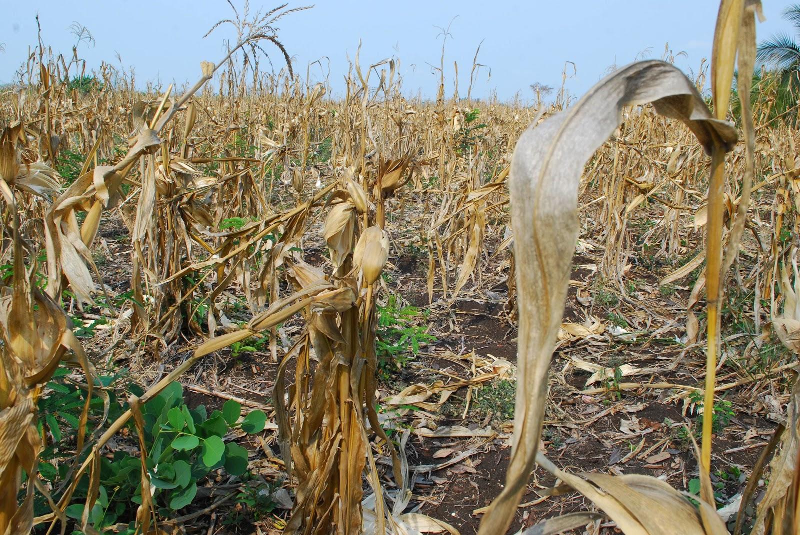 Presentan proyecto para incluir a La Pampa  dentro del régimen promocional destinado a incrementar la producción agropecuaria en tierras rurales consideradas como de baja productividad