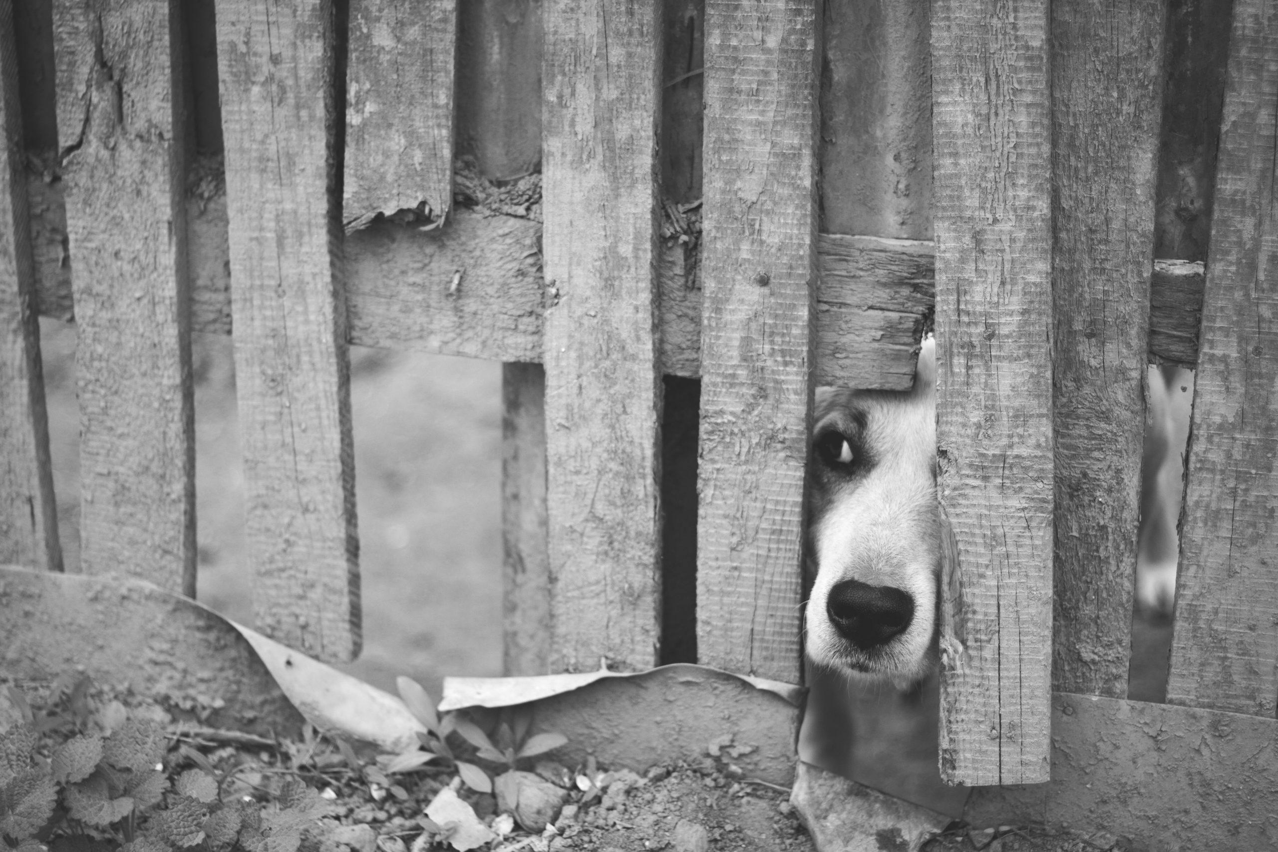 Proyecto de Ley en Diputados busca que se enseñe derechos animales en las escuelas