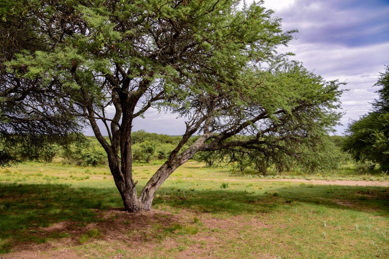 La Pampa: Convocan a productores para la presentación de proyectos de conservación del bosque nativo
